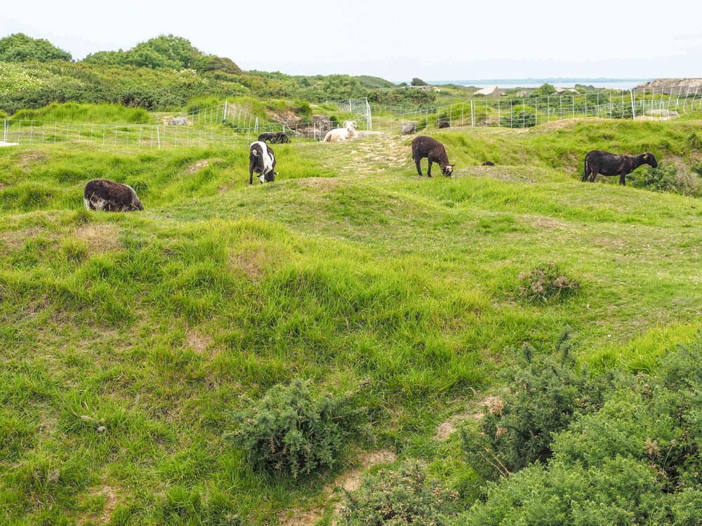 What to see at Omaha Beach, Normandy, France: Pointe du Hoc sheep and bomb craters