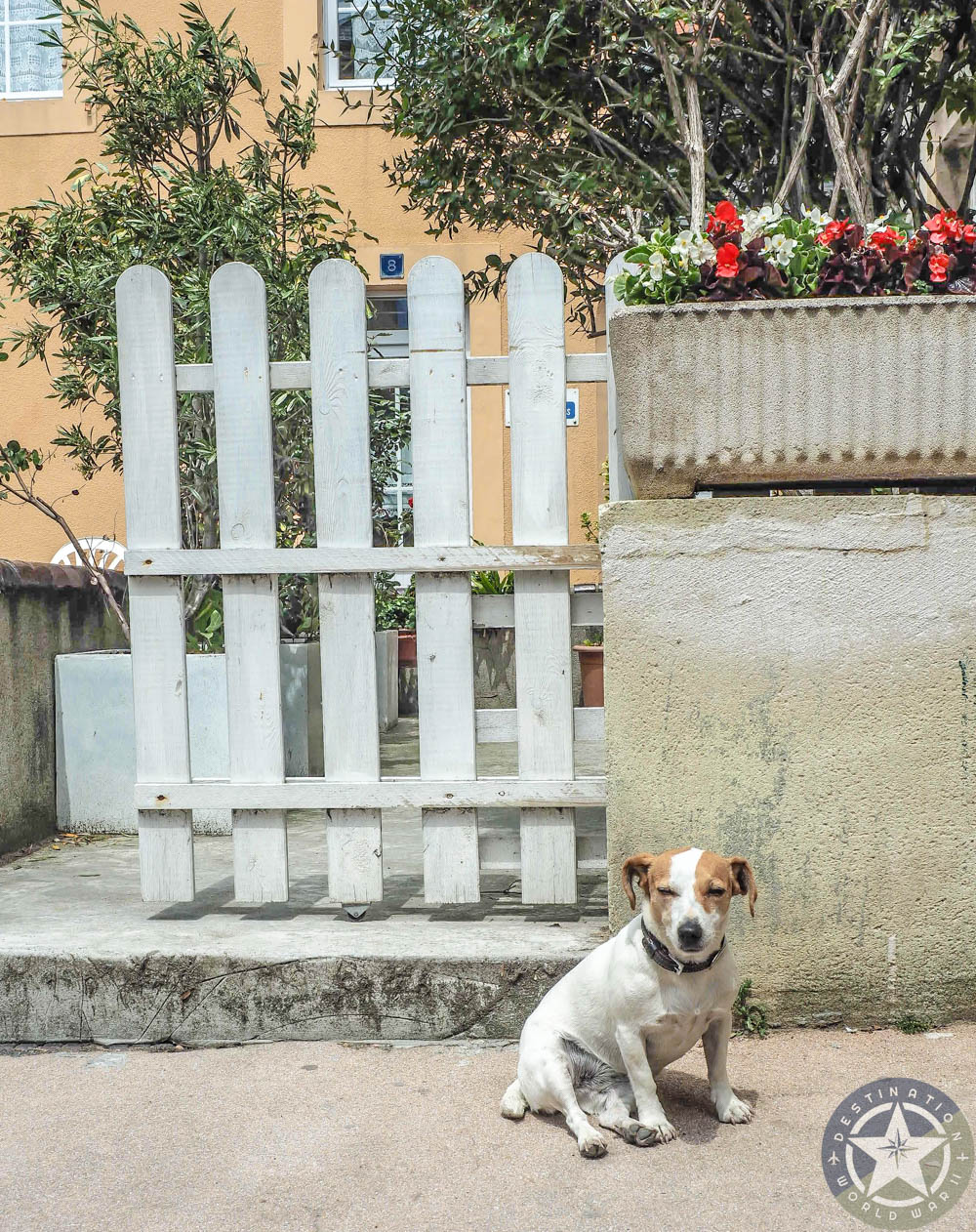 cute dog in front of a white picket fence in france